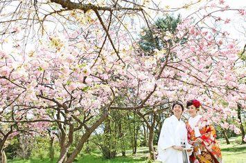 [人気]春の桜ロケーションフォトウェディングのご予約はお早めに